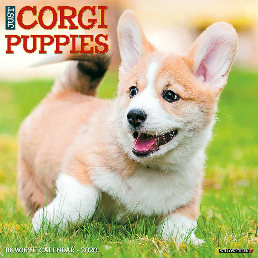 2020 Corgi Puppies Calendar
