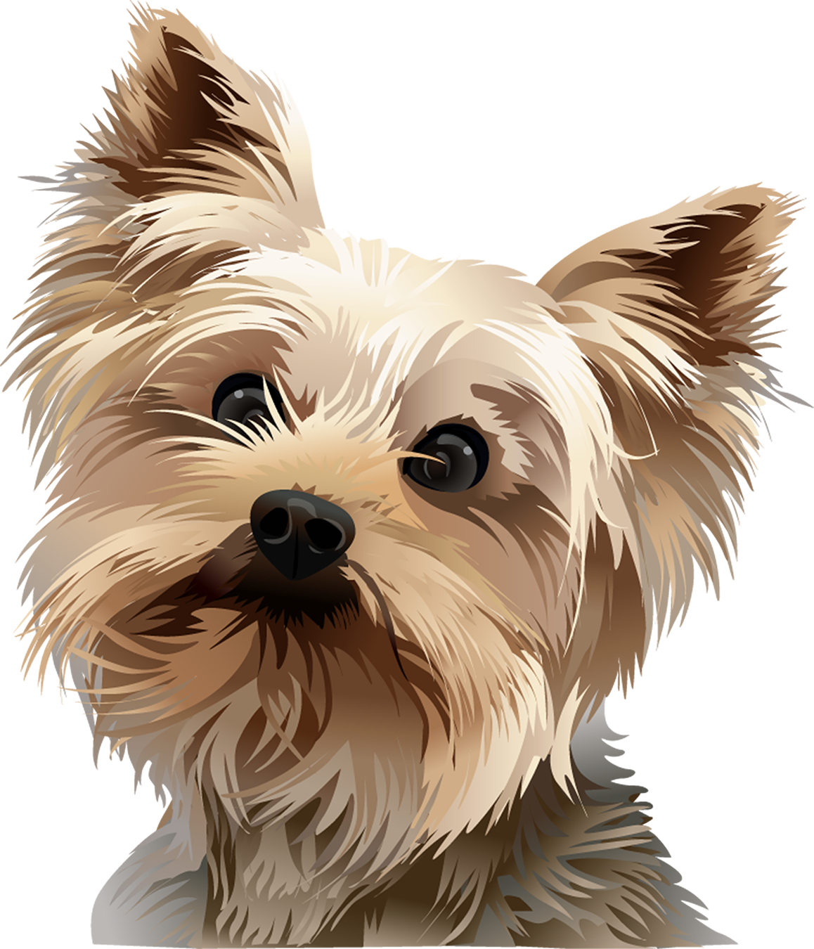Yorkie T-Shirt Head Shot - Vibrant Vector