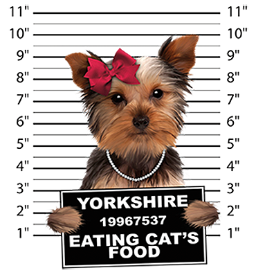 Yorkshire Terrier T-Shirt - Mug Shot