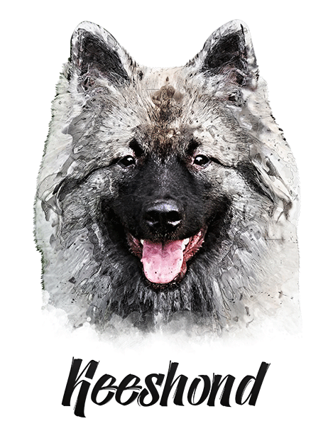 Keeshond T-Shirt - Vivid Colors