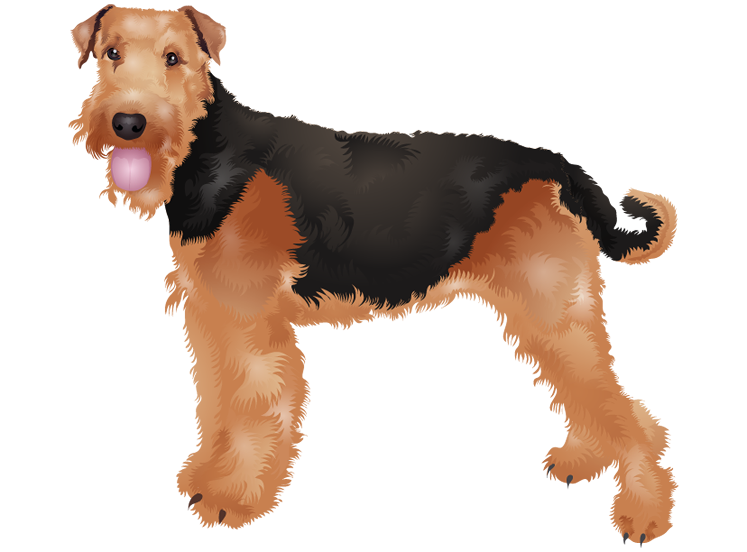 Airedale Terrier T-Shirt - Vibrant Vector