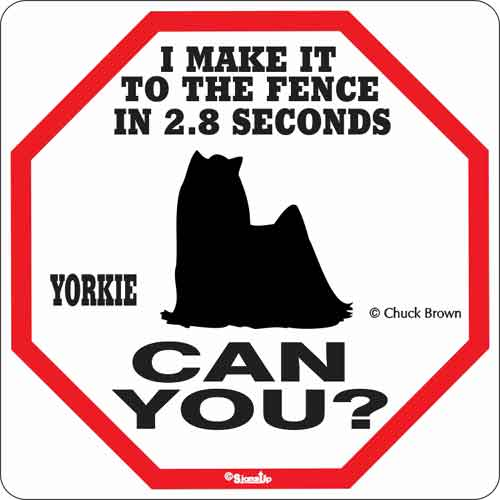 Yorkie 2.8 Seconds Sign