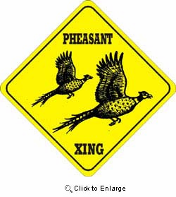 Pheasant Crossing