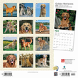 2020 Golden Retrievers Calendar