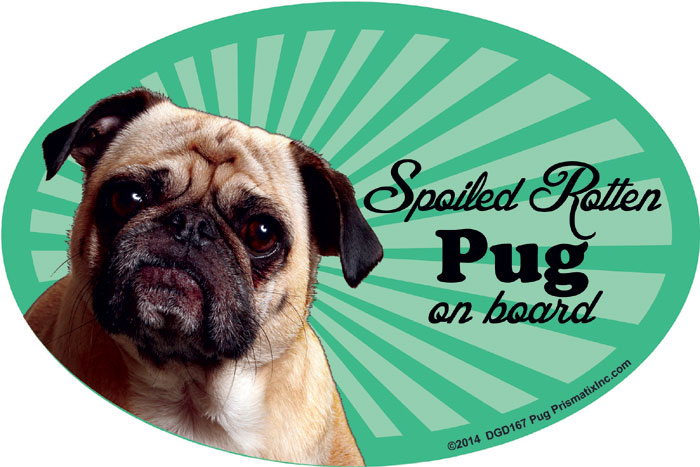 Pug Car Magnet - Spoiled Rotten