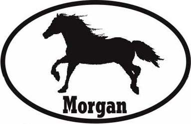 Morgan Horse Bumper Sticker Euro