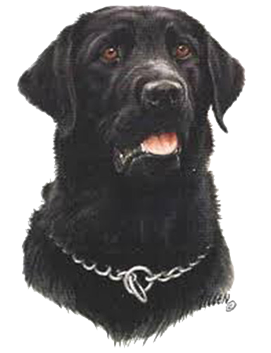 Black Lab T Shirt by James Killen