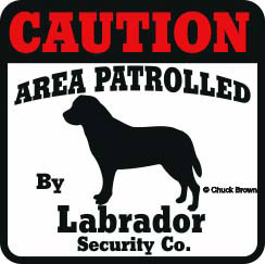 Labrador Bumper Sticker Caution