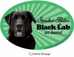 Black Lab Car Magnet - Spoiled Rotten