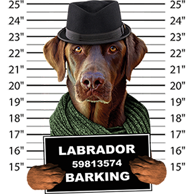 Labrador Retriever Chocolate T-Shirt - Mug Shot