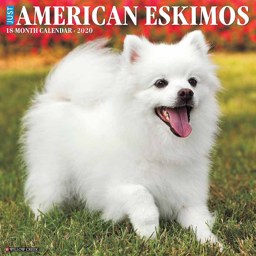 2020 American Eskimos Calendar Willow Creek