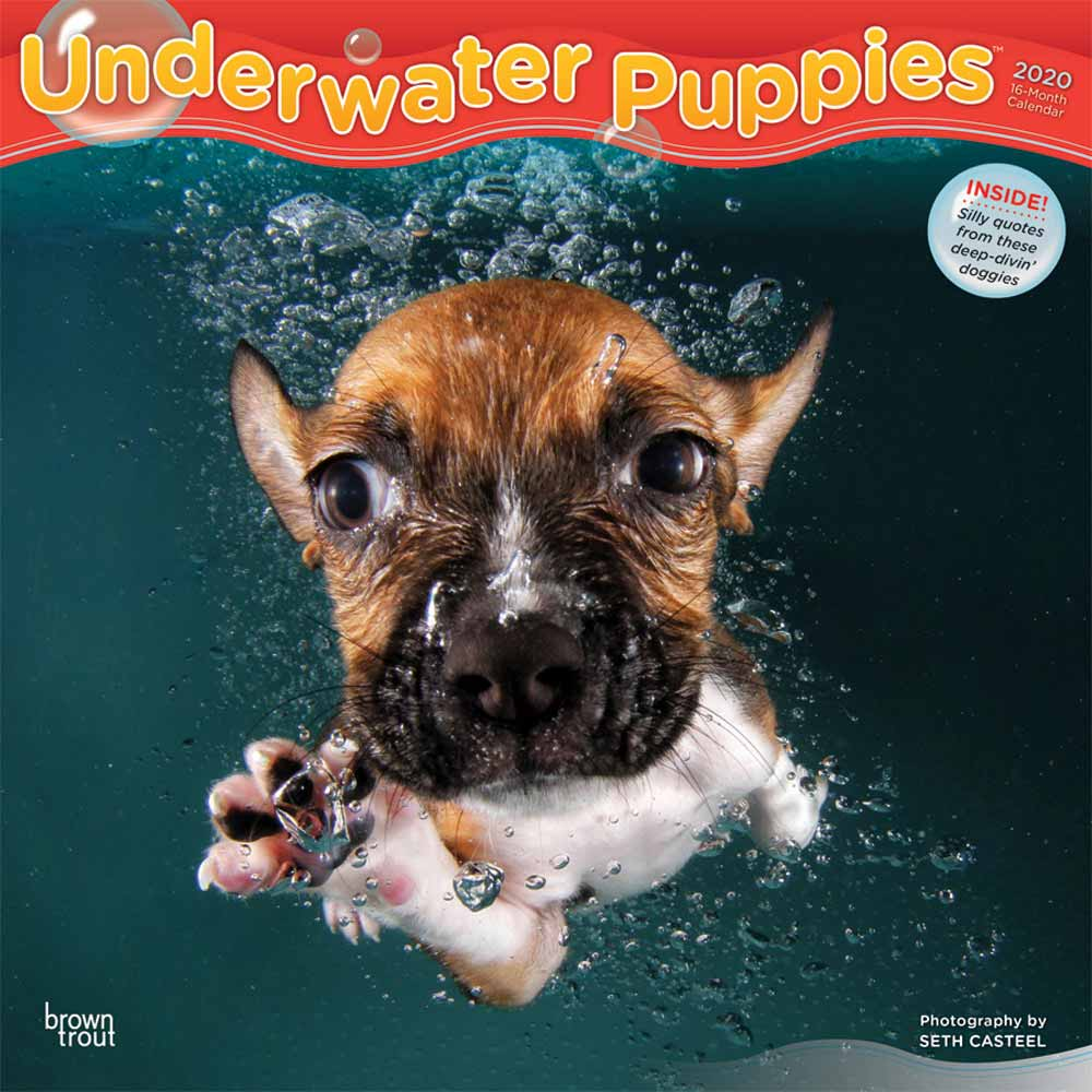 2020 Underwater Puppies Calendar