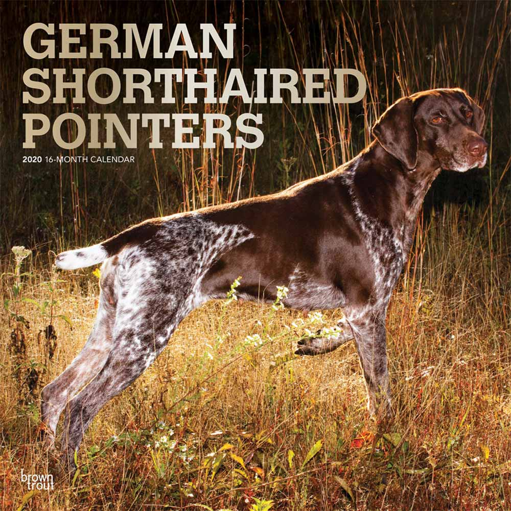 2020 German Shorthaired Pointers Calendar