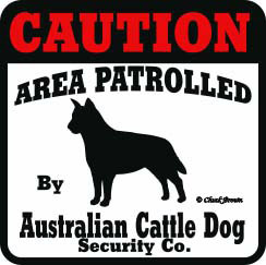 Australian Cattle Dog Bumper Sticker Caution