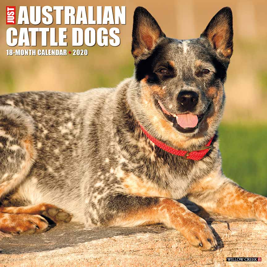 2020 Australian Cattle Dogs Calendar Willow Creek