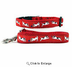 Jack Russell Terrier Collar & Leash
