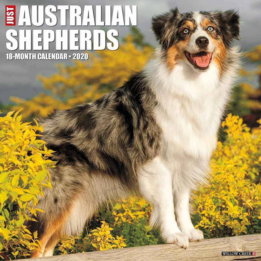 2020 Australian Shepherds Calendar Willow Creek