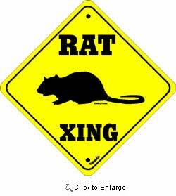 Rat Crossing