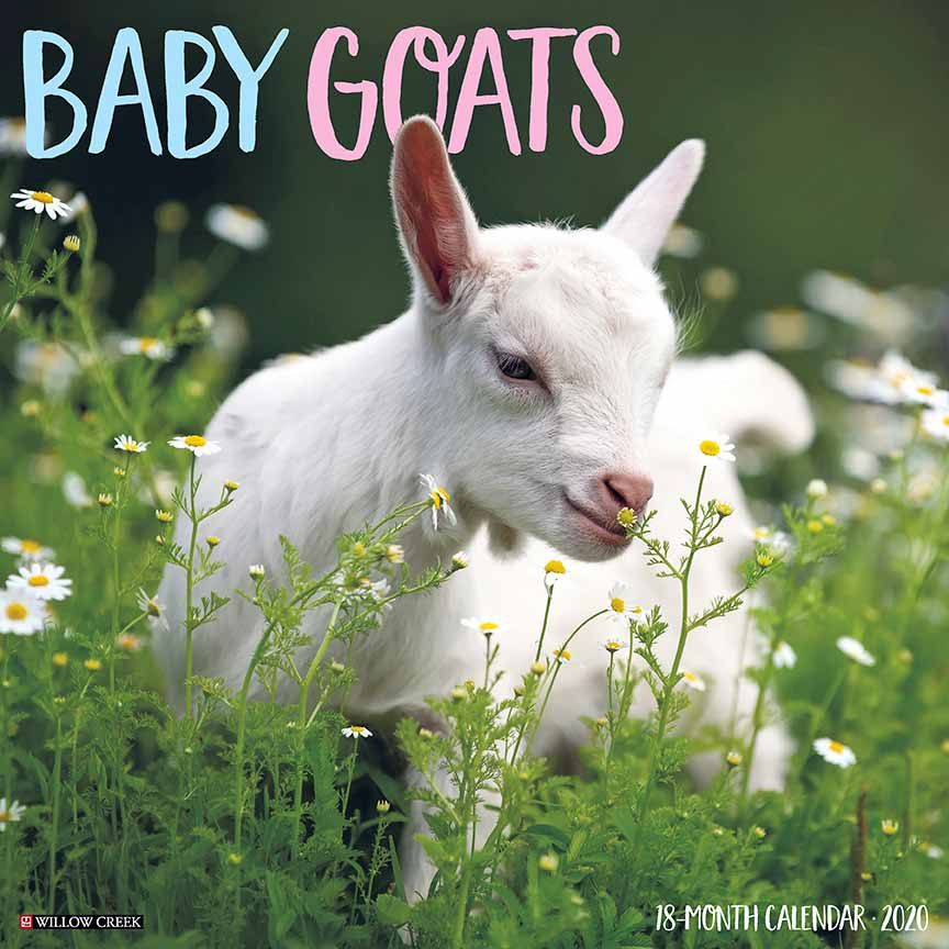 2020 Baby Goats Calendar Willow Creek