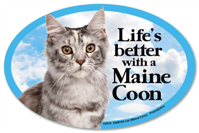 Maine Coon Cat Car Magnet - Life's Better
