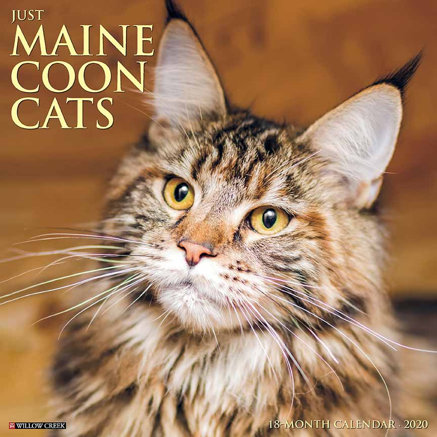 2020 Maine Coon Cats Calendar Willow Creek