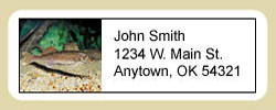 Walleye Address Labels