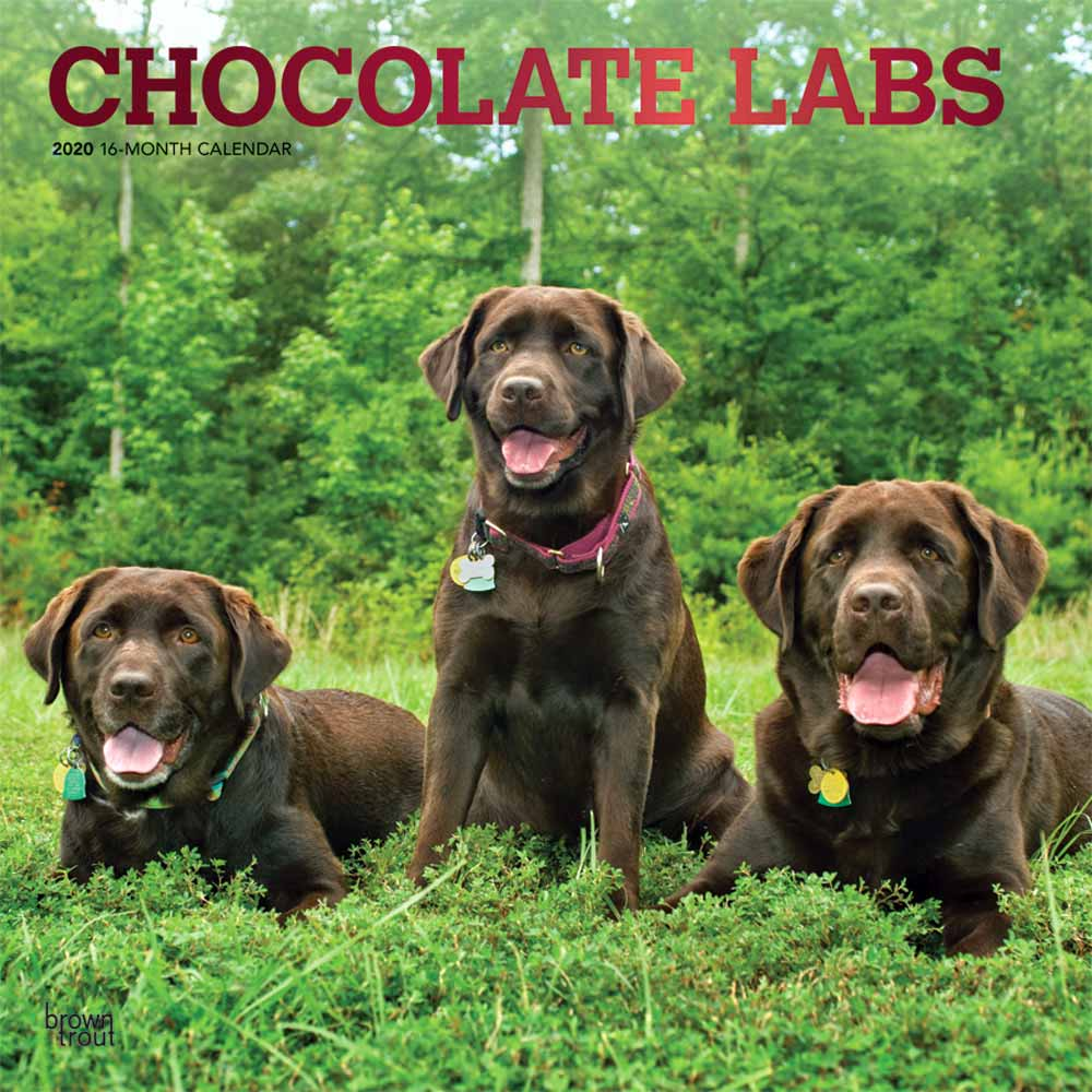 2020 Chocolate Labrador Retrievers Calendar