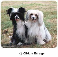 Chinese Crested Mousepad