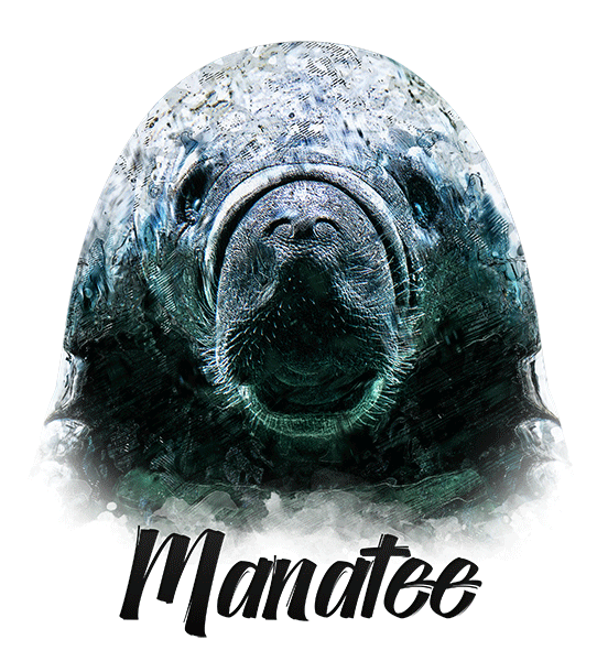 Manatee T-Shirt - Vivid Colors