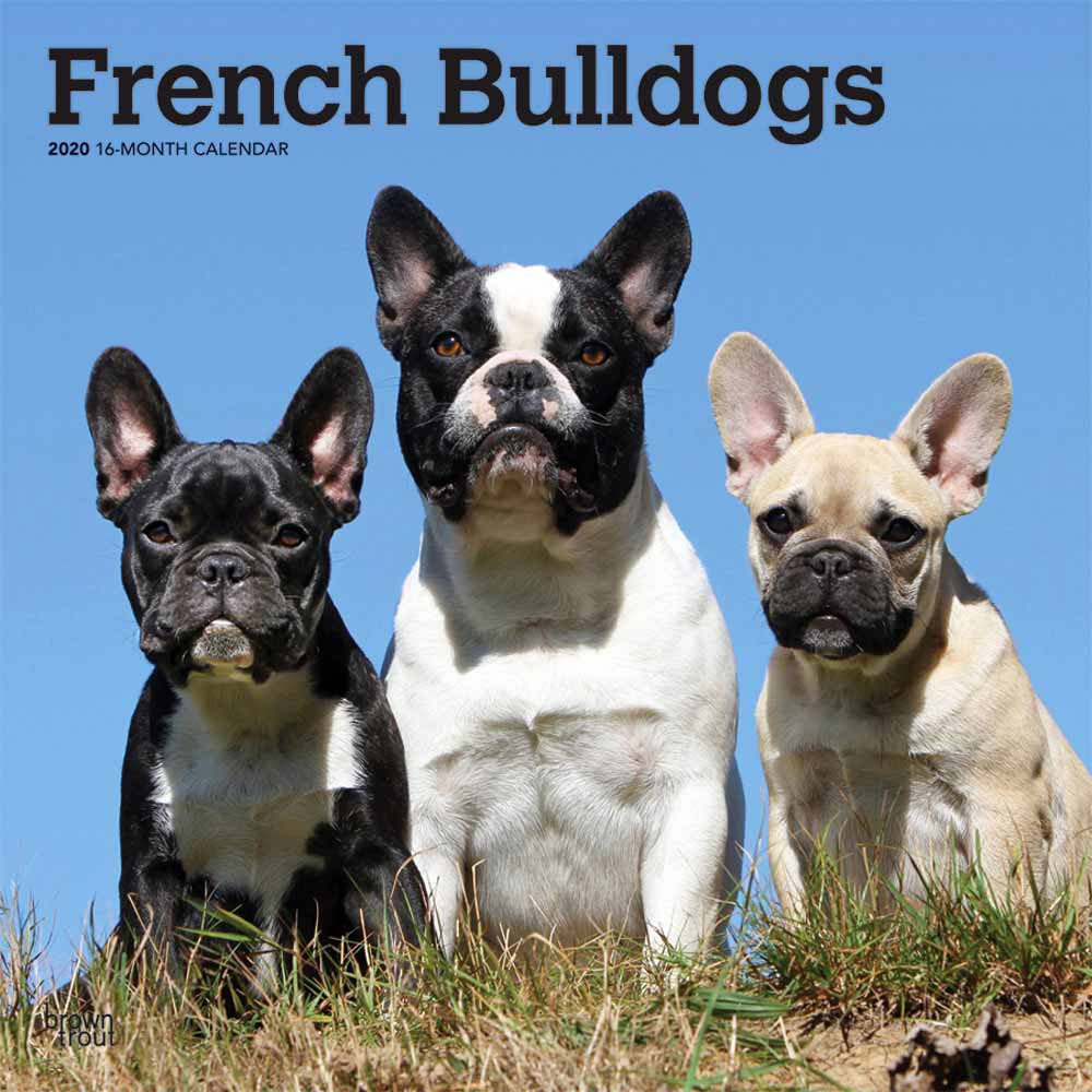 2020 French Bulldogs Calendar