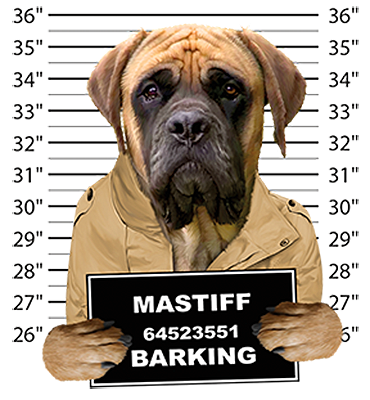 Mastiff T-Shirt - Mug Shot