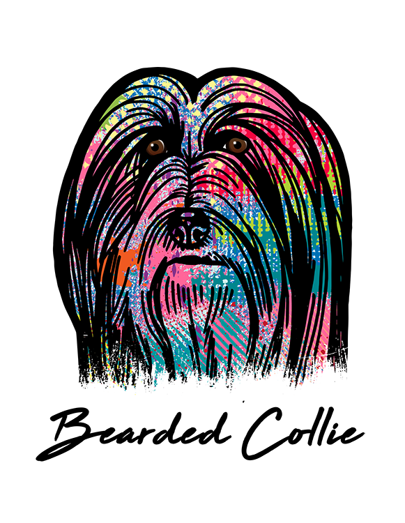 Bearded Collie T Shirt Colorful Abstract