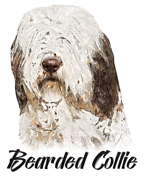 Bearded Collie T-Shirt - Vivid Colors