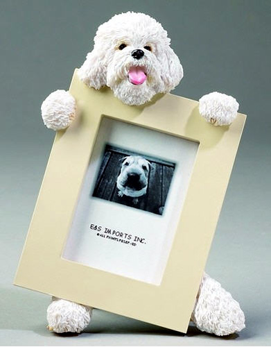 Bichon Frise Picture Frame