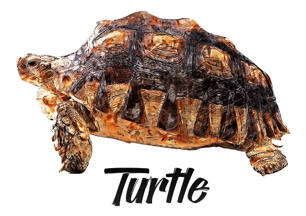 Turtle T-Shirt - Vivid Colors
