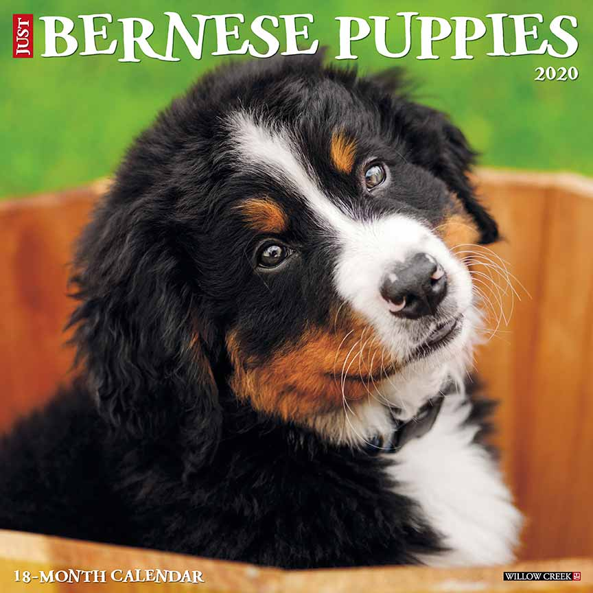 2020 Bernese Mountain Dog Puppies Calendar