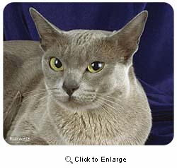 Burmese Cat Mousepad