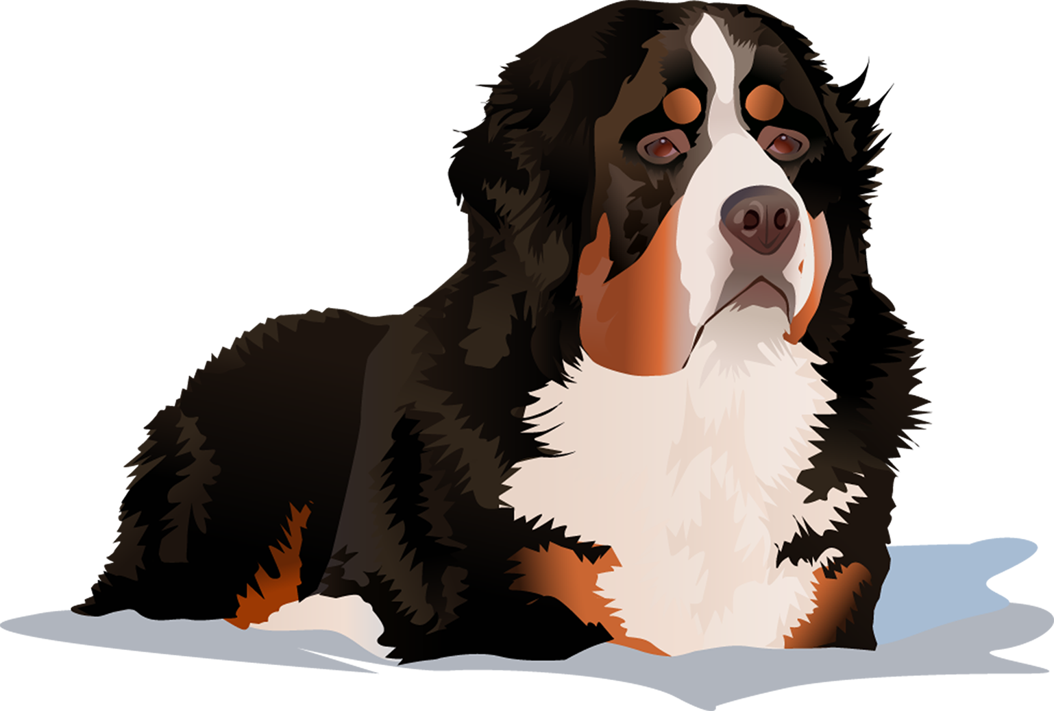 Bernese Mountain Dog T-Shirt Laying Down - Vibrant Vector