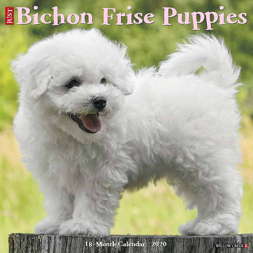 2020 Bichon Frise Puppies Calendar Willow Creek