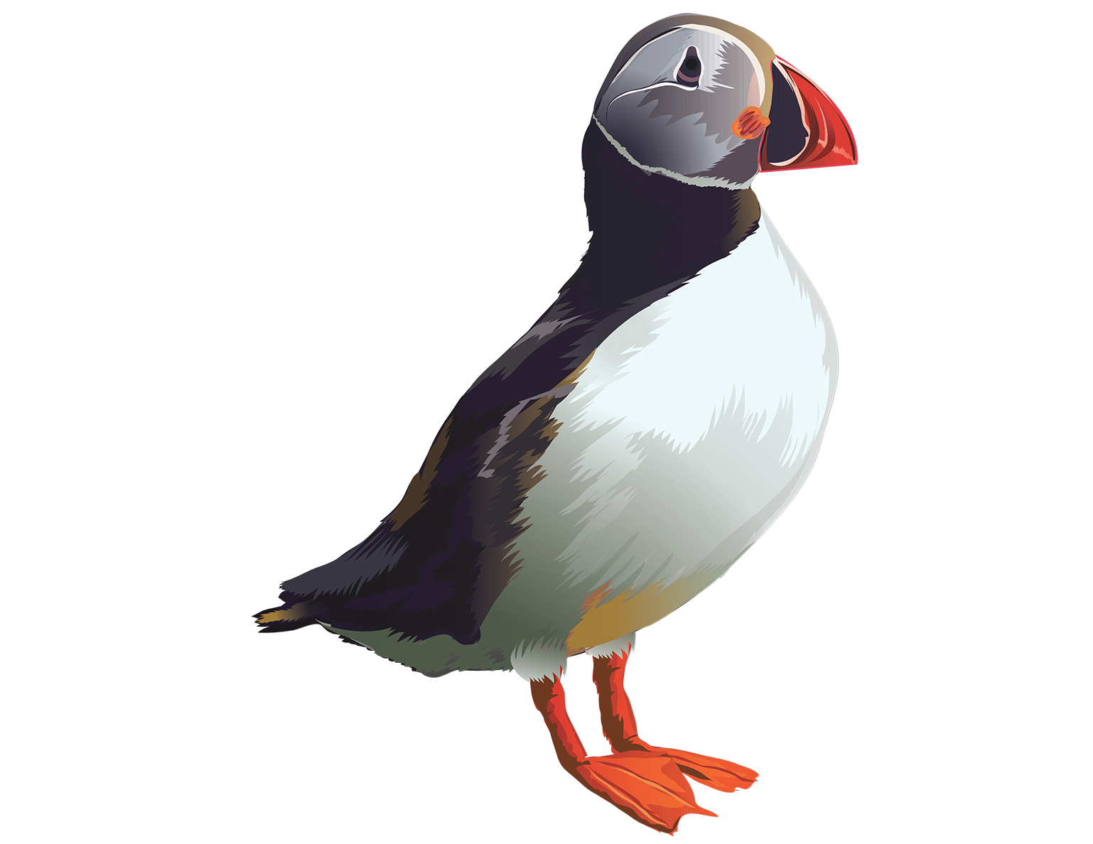 Puffin T-Shirt - Vibrant Vector