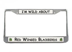 Red Winged Blackbird License Plate Frame