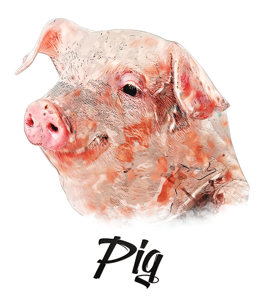 Pig T-Shirt - Vivid Colors