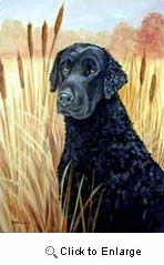 Curly Coated Retriever Garden Flag