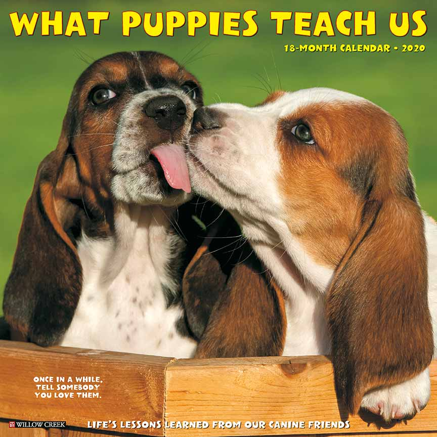2020 What Puppies Teach Us Calendar Willow Creek