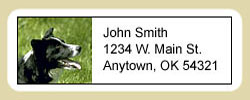 Border Collie Address Labels