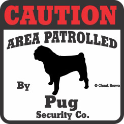 Pug Bumper Sticker Caution