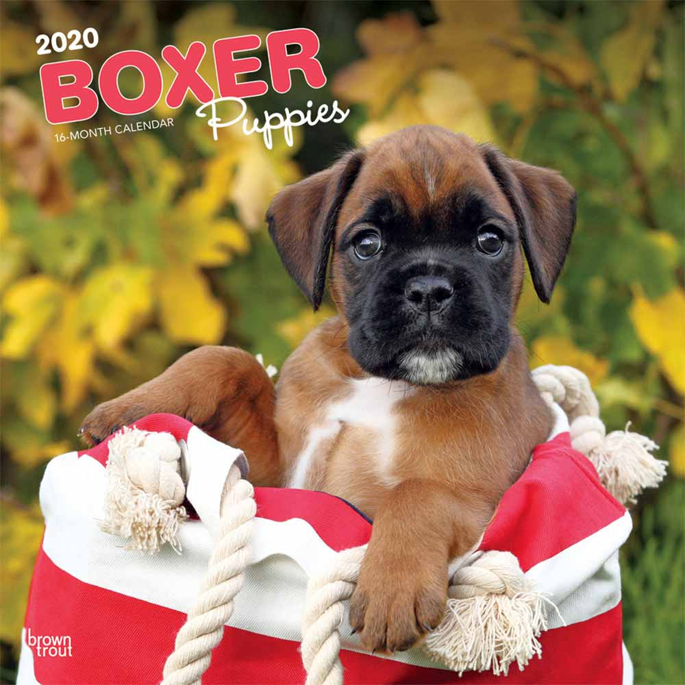 2020 Boxer Puppies Calendar