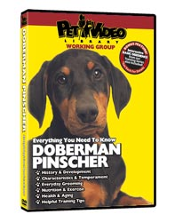 Doberman Pinscher Video