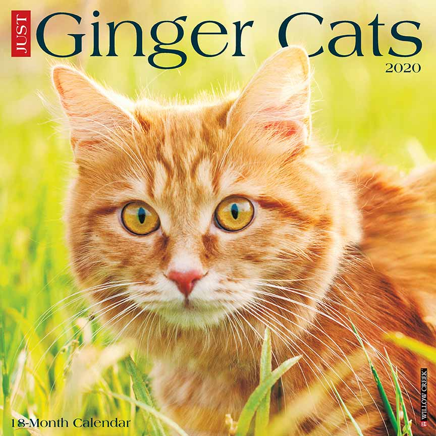 2020 Ginger Cats Calendar Willow Creek