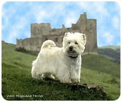 West Highland Terrier Mousepad